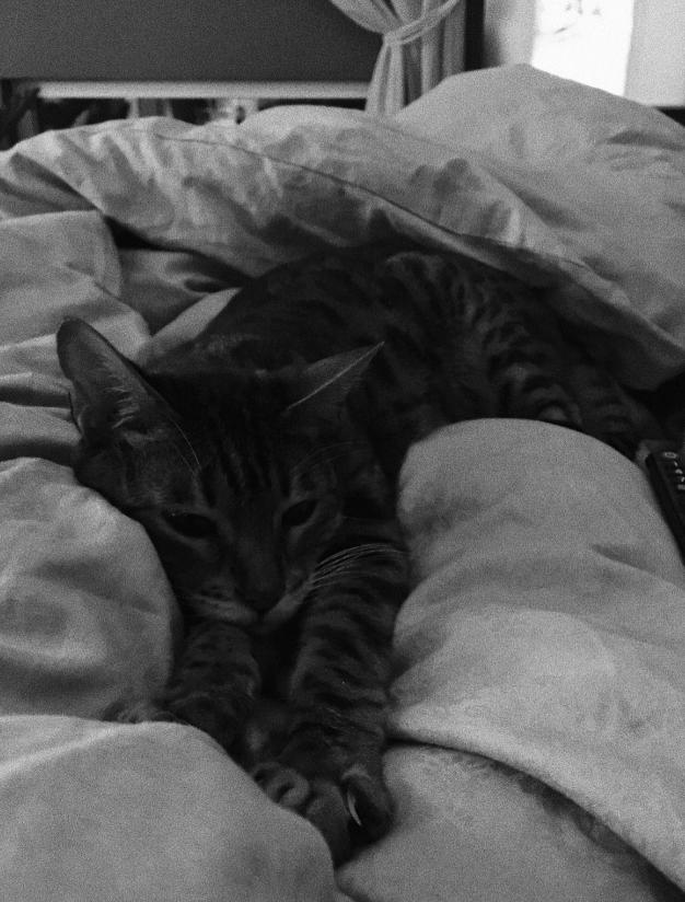 mio.katt.michelle